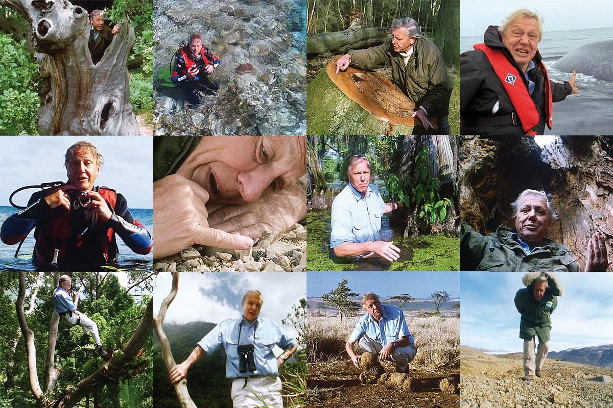 Entrevista a David Attenborough