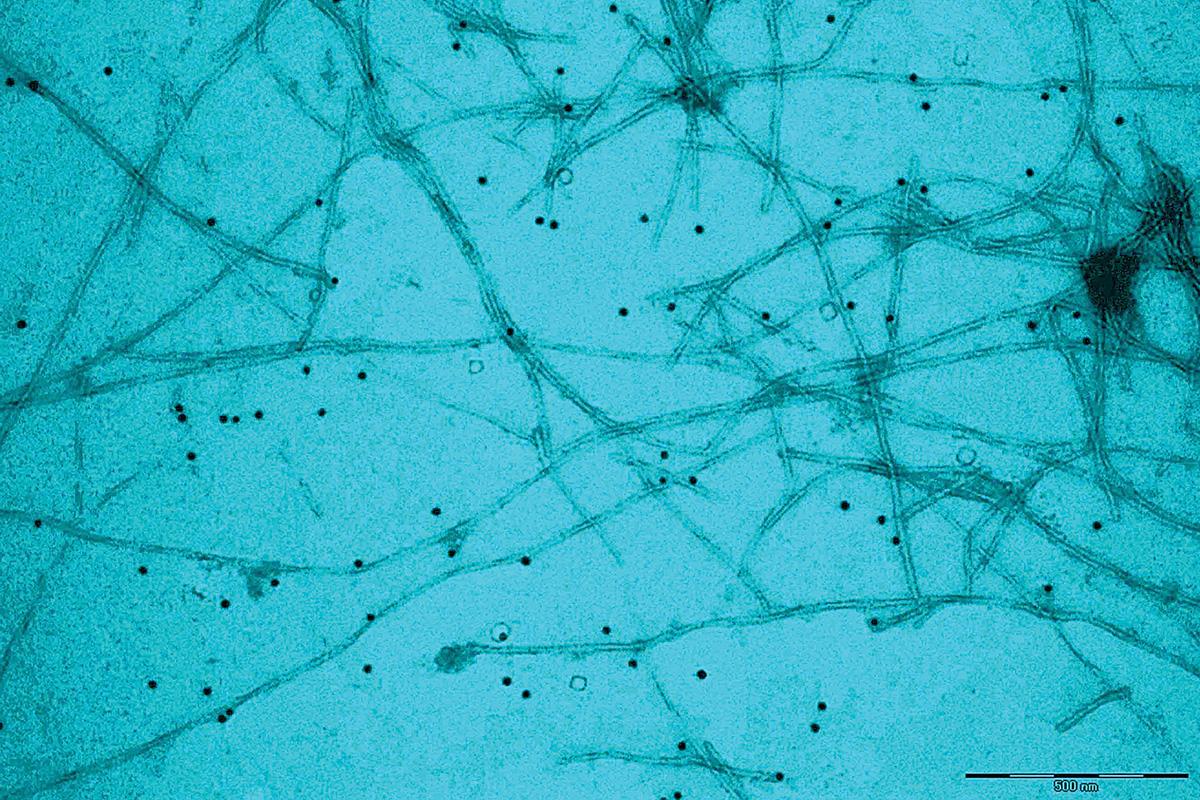 Nanopànic o nanoeufòria?: Nanoinfo