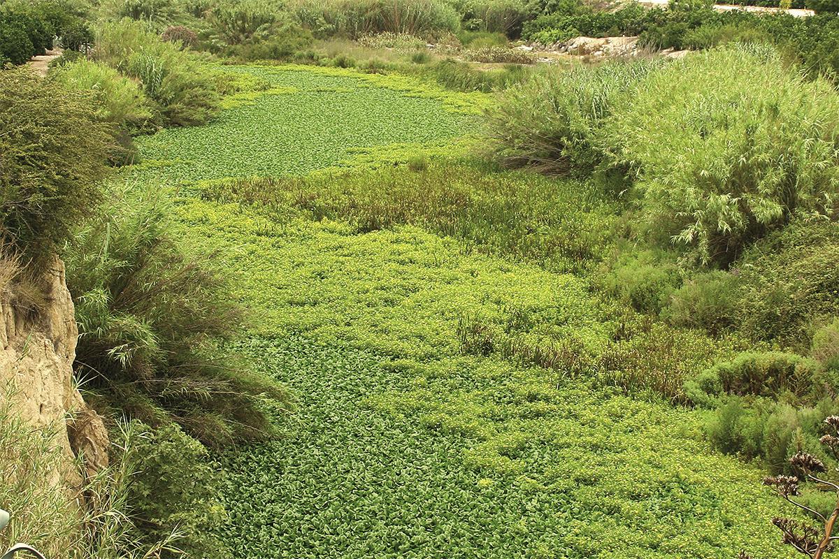 La invasió verda