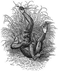 Darwin als quioscos