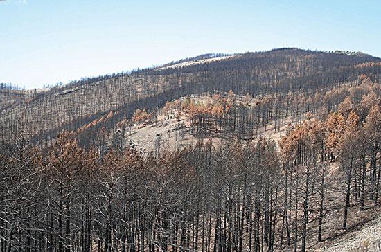 Incendis de Terol del 2009