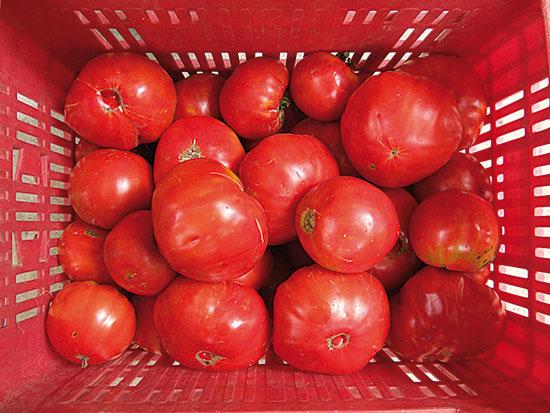 Valencian tomato