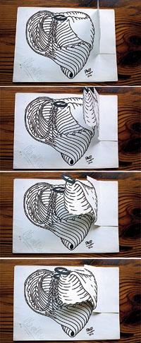 Diversos esquemes del cor, que resumeixen la tesi de Torrent-Guasp