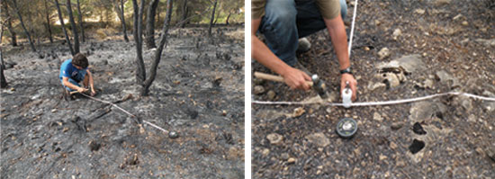 Transects being prepared to study the severity of the fire in a Mediterranean pine forest