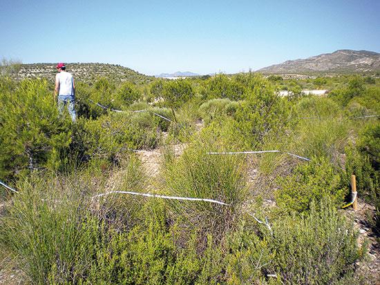 Treballs d'avaluació per quantificar i valorar l'estat de recuperació natural d'un pinar mediterrani