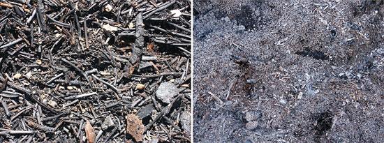 A l'esquerra, cendra rogenca i negra, i a la dreta, cendra grisa i blanca