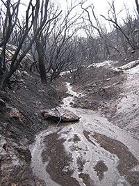 Conseqüències de les pluges després d'un incendi al Mont Carmel (Israel)