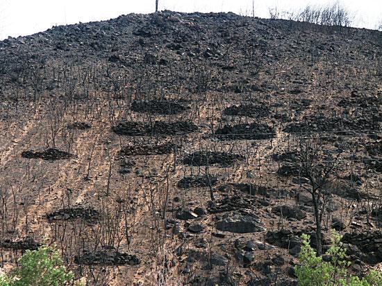 Una zona de Coímbra (Portugal), tras los incendios del 2005