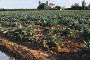 biodiversitat agrària