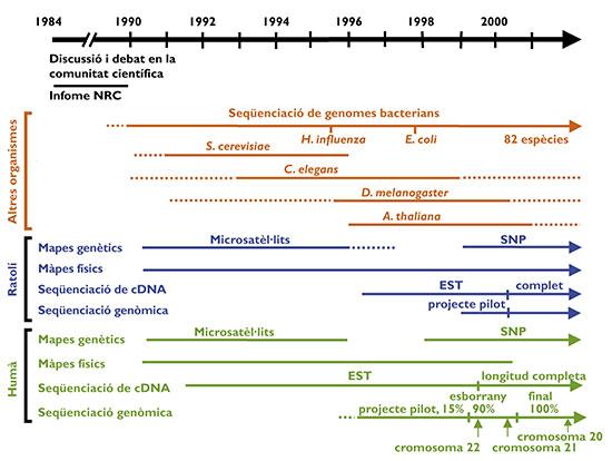 Qué Es El Genoma