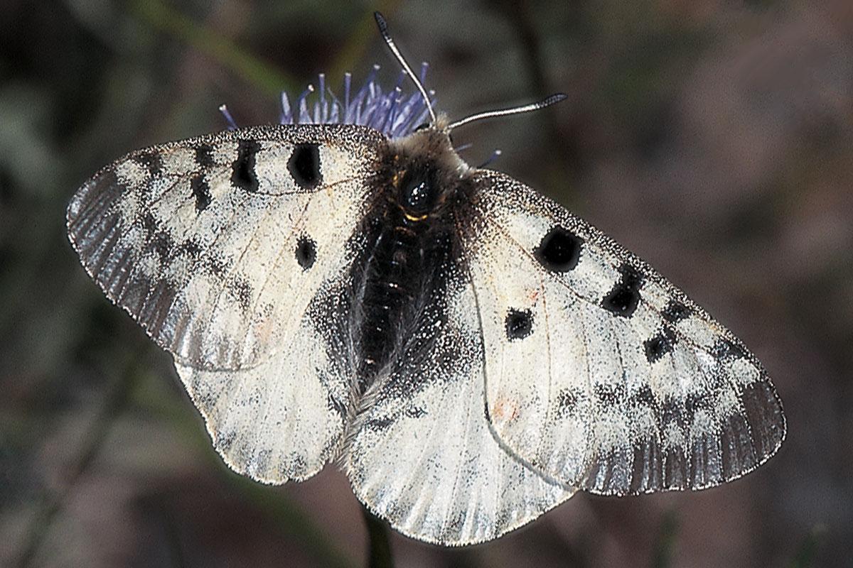 Un quart de segle d'estudi de les papallones