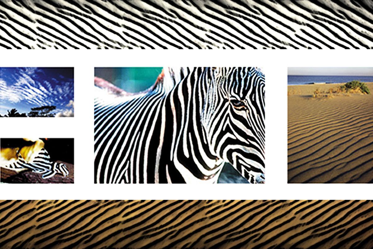 De zebres, dunes i altres coses