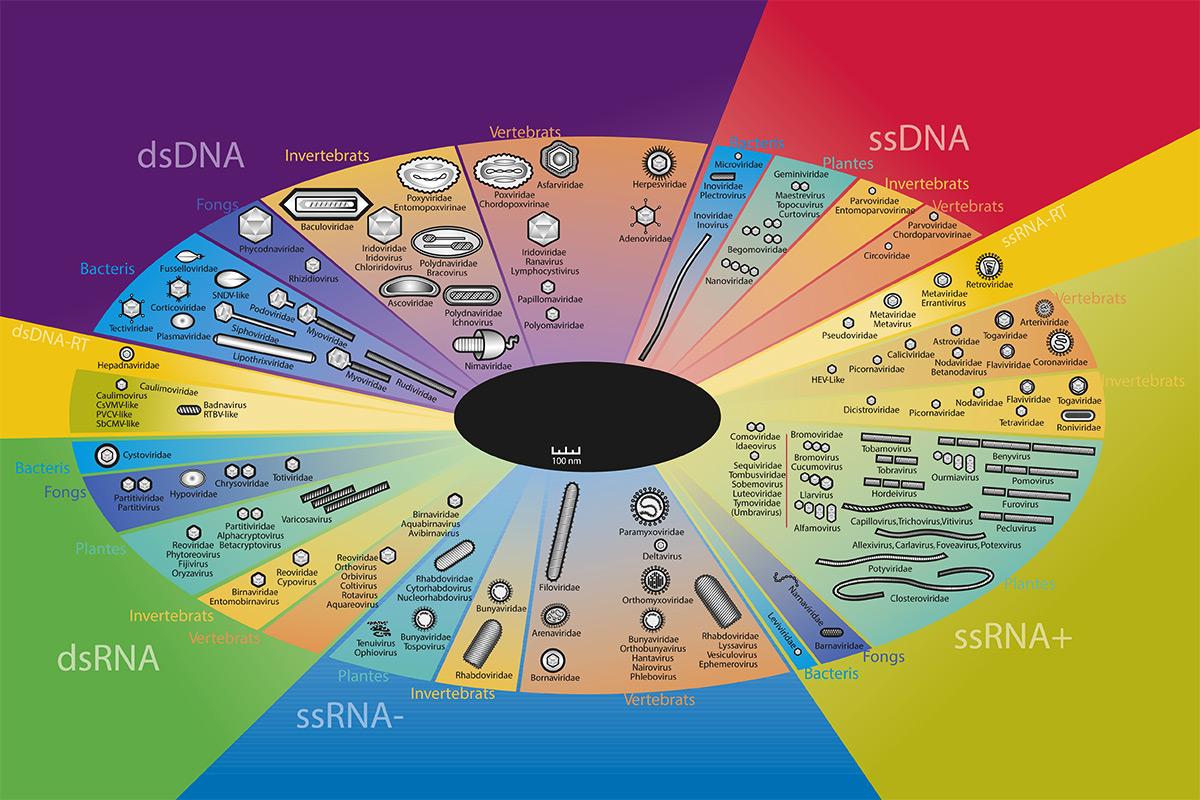 origen i evolució de virus