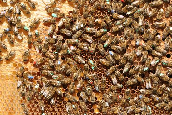 abelles2