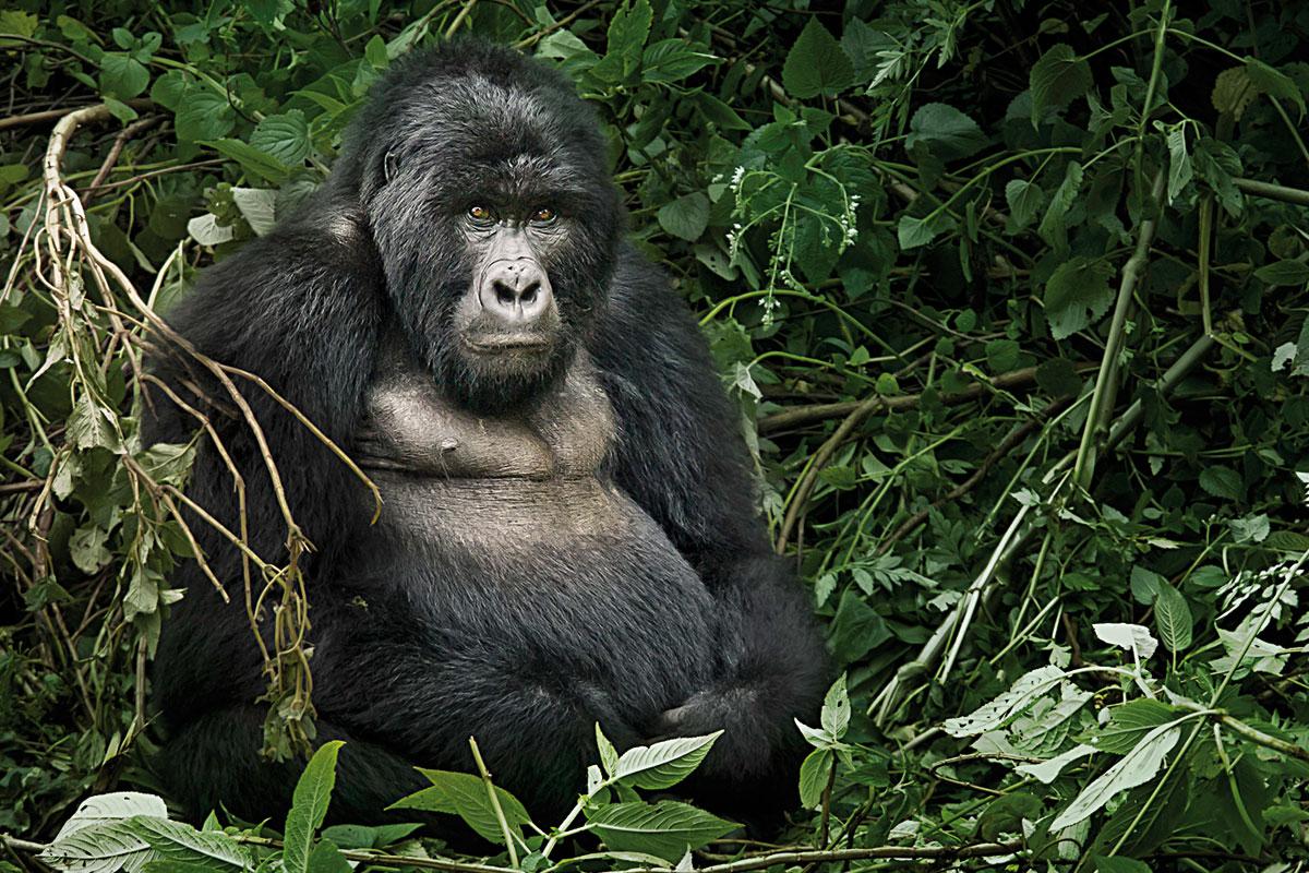Moviments de dispersió en els primats