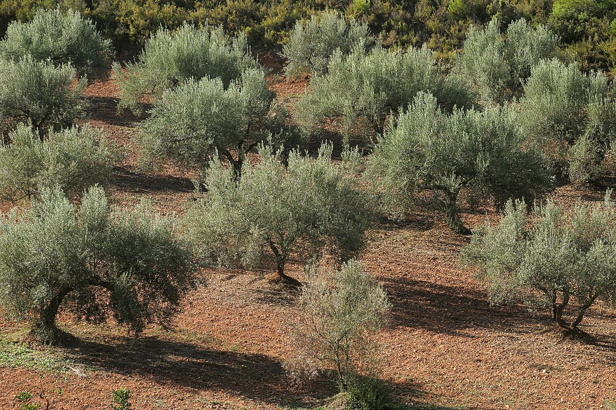 Secrets de l'olivera