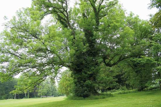 14-86 arbres