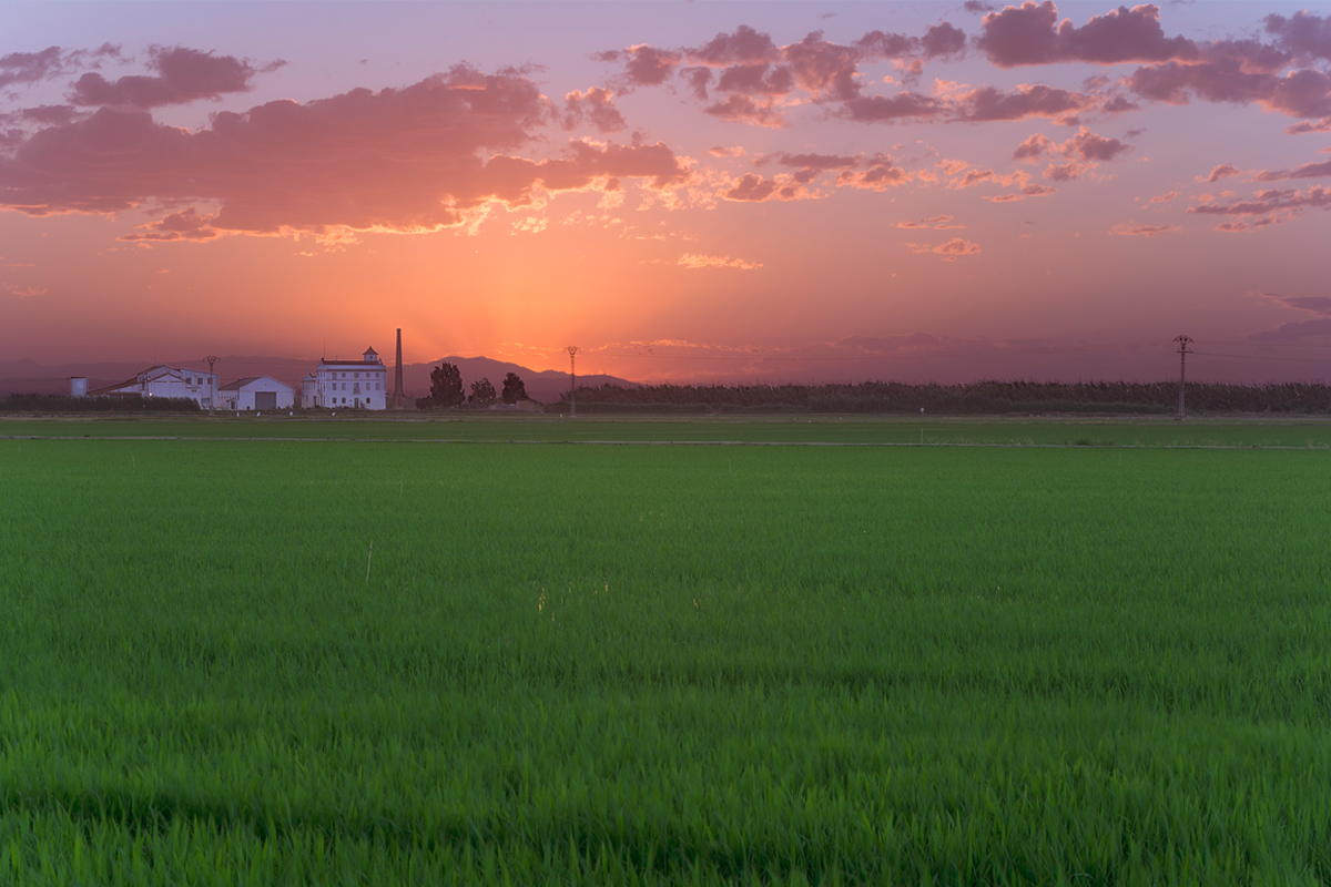arròs verd El Palmar