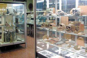 Museu Historicomèdic UV