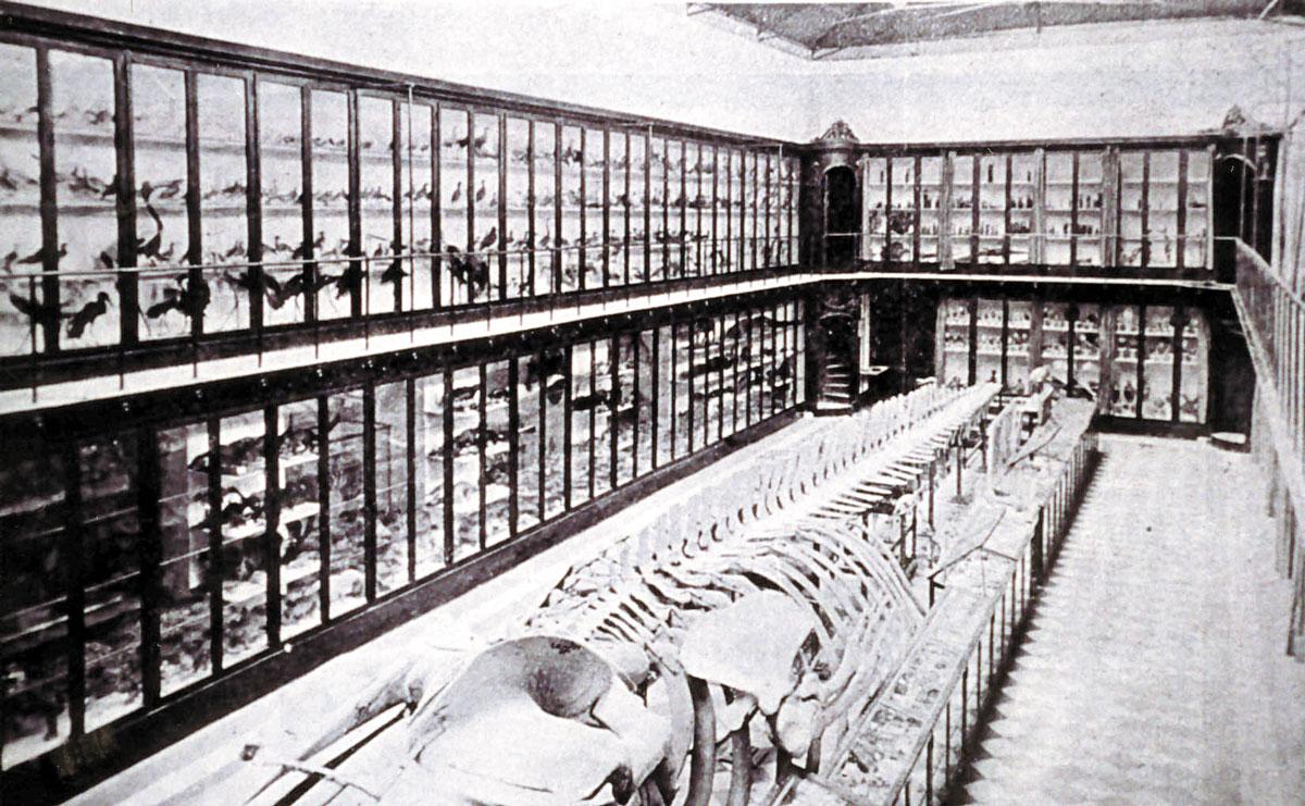 Museu d'Història Natural de la Universitat de València
