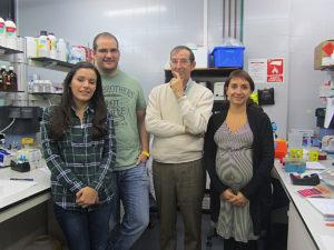 Arantxa Cebrián, investigadora predoctoral; Vicente Herranz, investigador postdoctoral Ciberned; José Manuel García Verdugo, catedràtic de Biologia Cel·lular; i Sara Gil-Perotín, investigadora postdoctoral del programa Río Hortega.