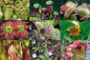 plantes carnívores