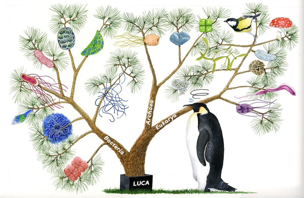 El gran arbre de la vida basat en el RNA ribosòmic