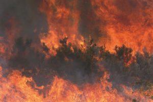 És important estudiar la qualitat i no només la quantitat de carboni segrestat al sòl després d'un incendi - cicle de carboni