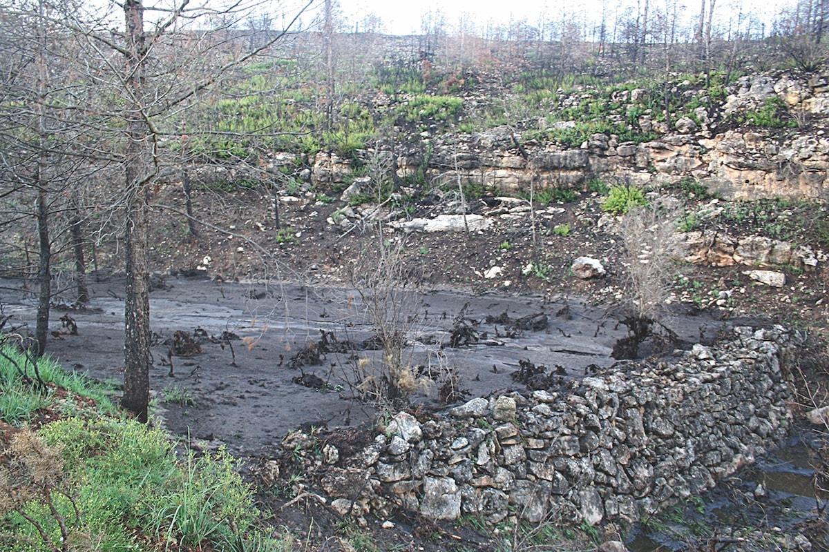 Després dels incendis augmenta la pèrdua de sòl - cicle hidrològic