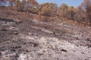 El Pinós (Alacant) una setmana després de l'incendi de 2003