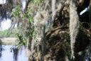 Plantas que pueden vivir en condiciones extremas