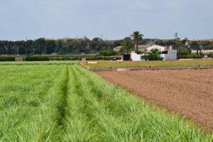 horta de València