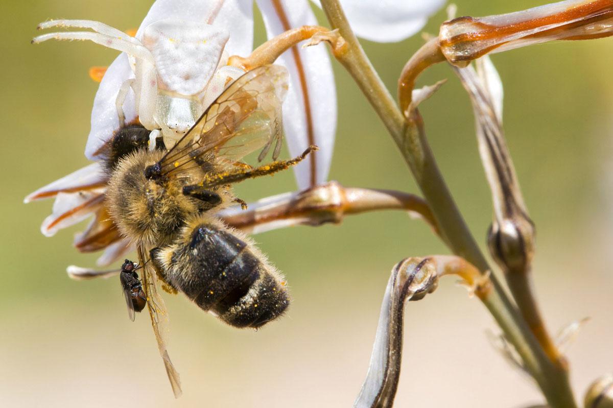 Foto cranc abella Roberto García Roa