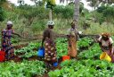 dones agrícoles davant canvi climàtic