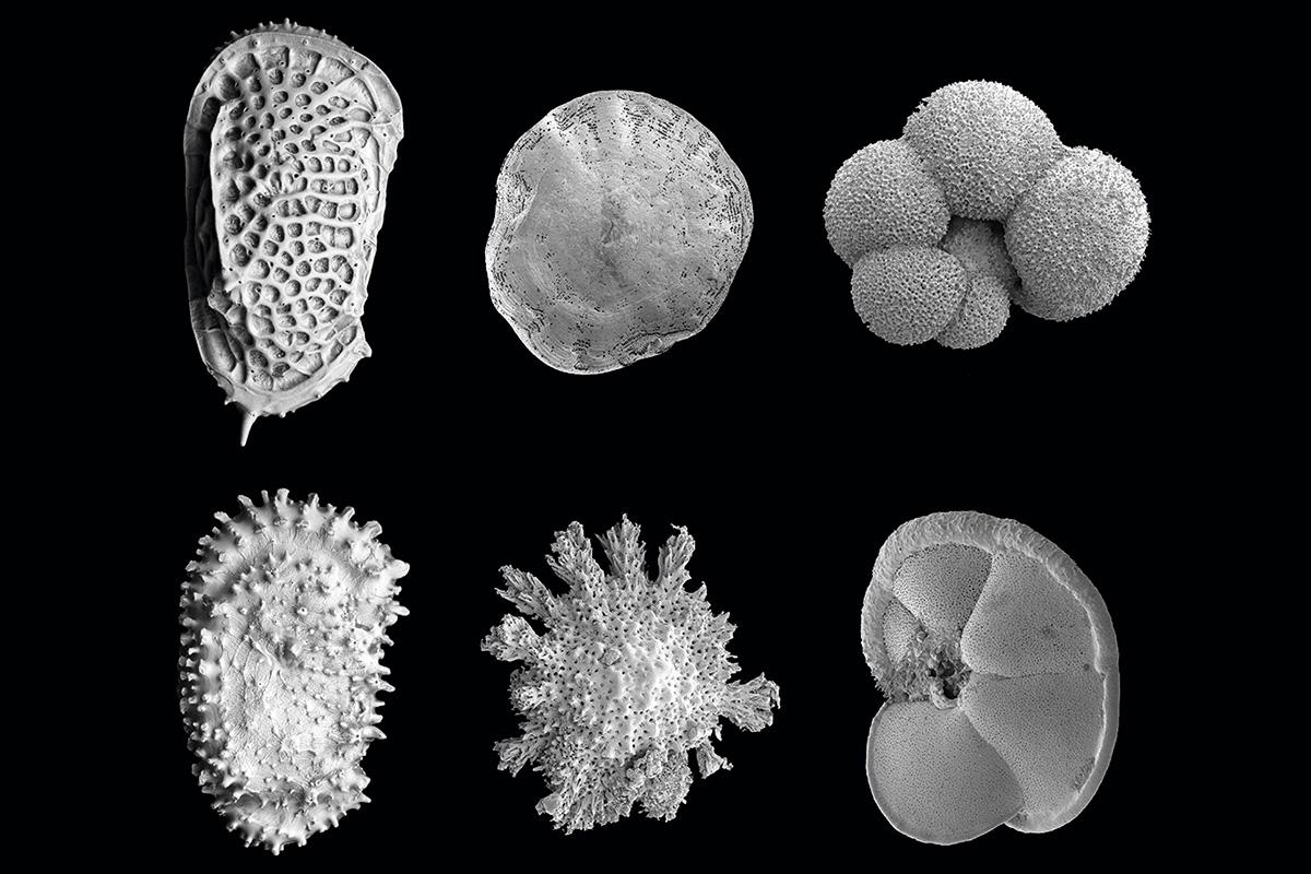 biodiversitat marina