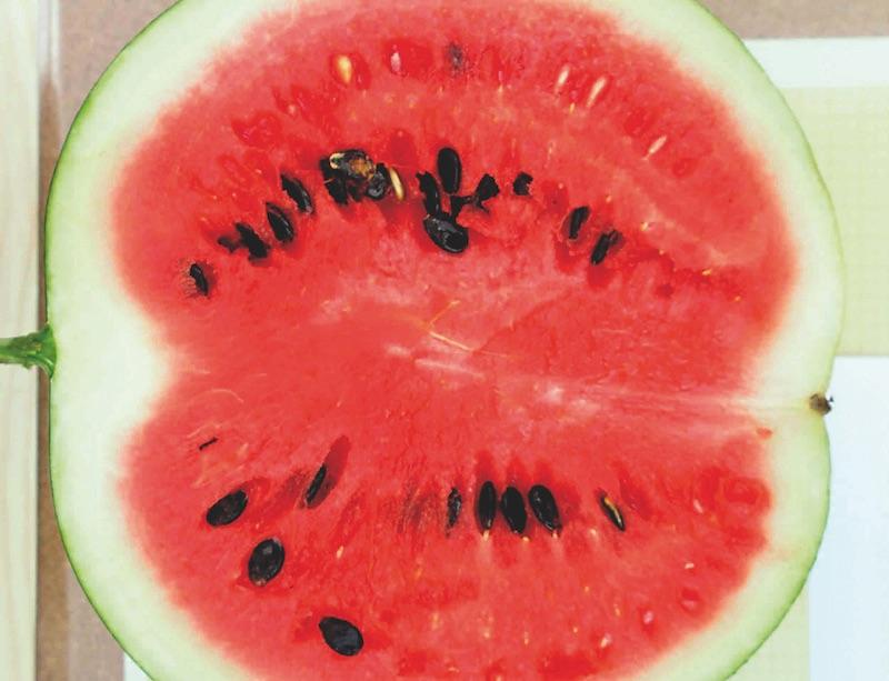 Fruites i verdures d'estiu