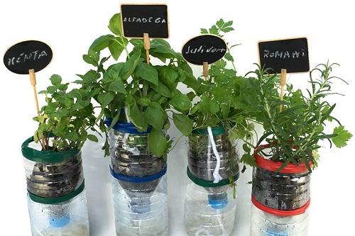 Activitats didàctiques amb plantes aromàtiques.