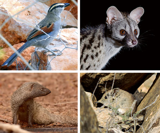 animals muluia