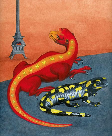 salamandra illustració