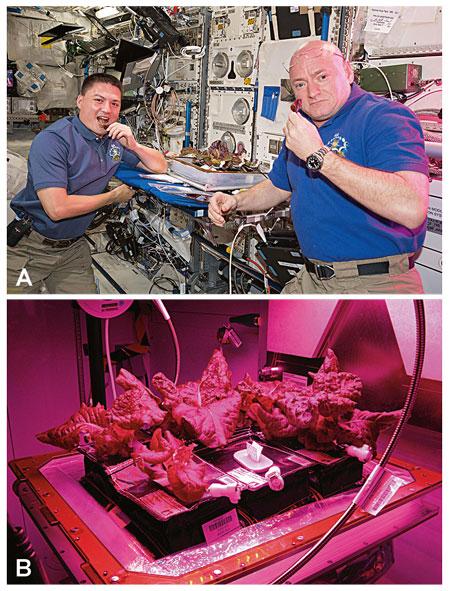 astronautes collita espacial