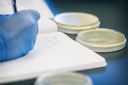 millora genètica biotecnologia