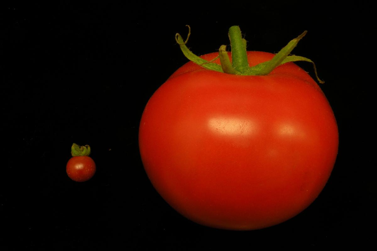 edició de gens en plantes