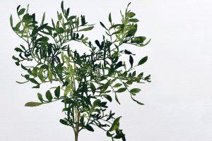 plantes del futur separador jose saborit