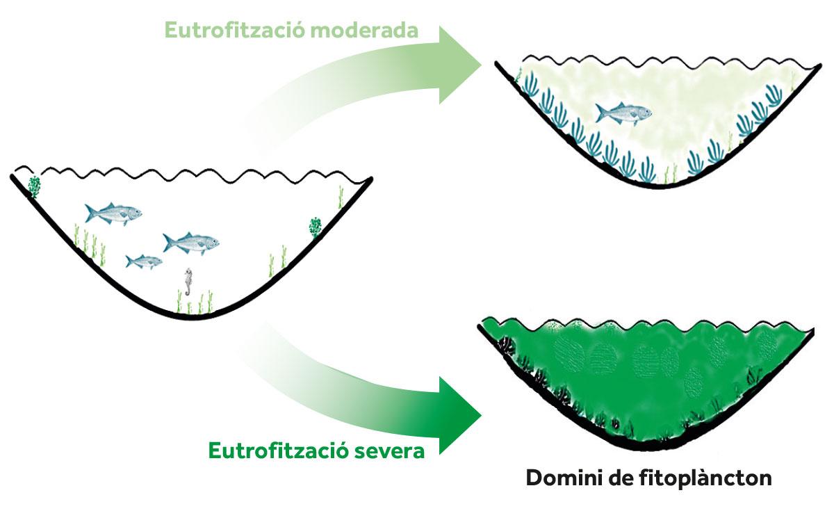 infografia eutrofització