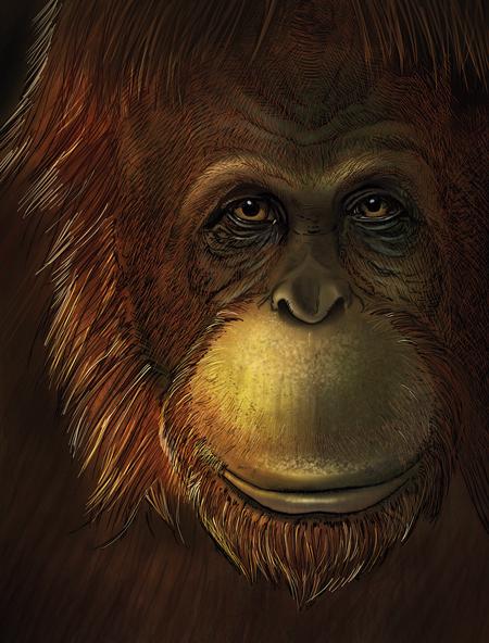 primat petjades passat