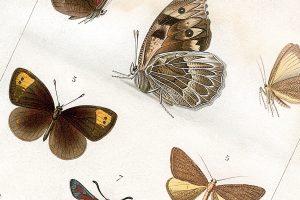 làmina Real Sociedad Española de Historia Natural