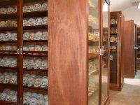 col·leccions osteològiques