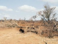 Desertificació